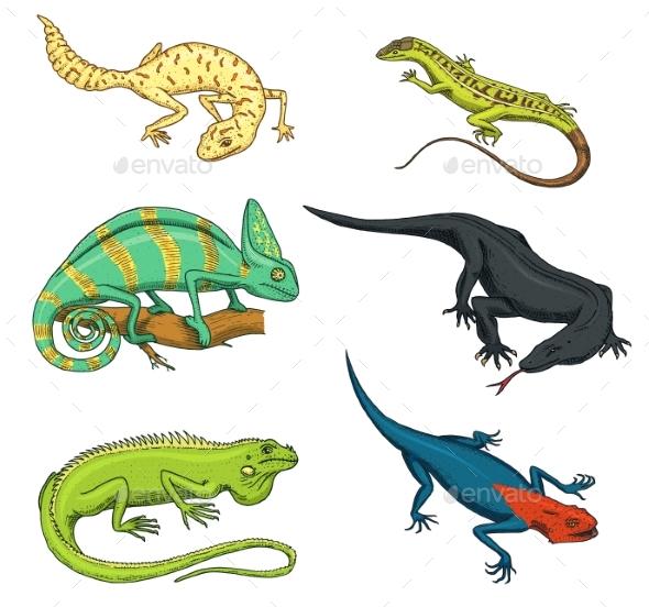Lizards - Animals Characters