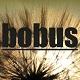 bobus