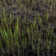 Grass grows in spring - VideoHive Item for Sale