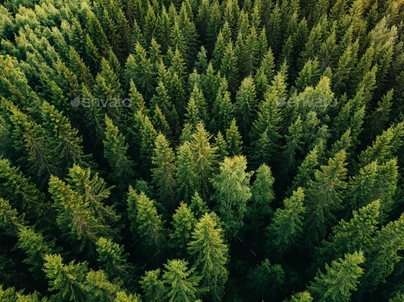 Aerial top view of summer green trees in forest in rural Finland. - Stock Photo - Images