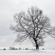 Solitary tree in winter - PhotoDune Item for Sale