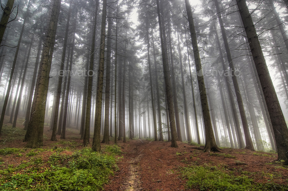Forest in early morning - Stock Photo - Images