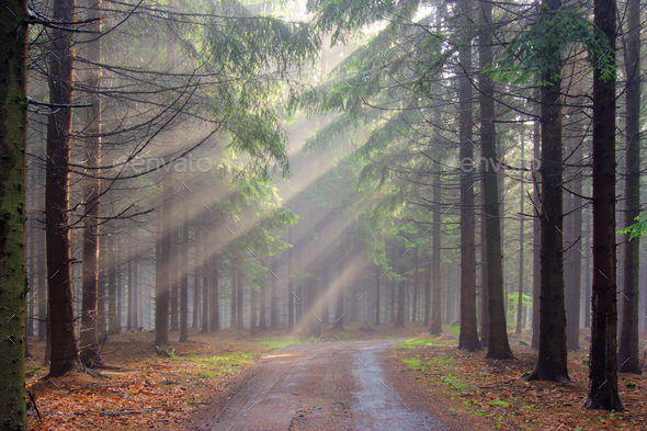 Forest in fog - Stock Photo - Images