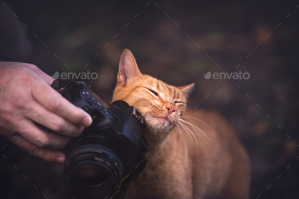 Kitty Loves Camera - Stock Photo - Images