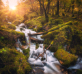 Colorful green forest with little waterfall at sunset - PhotoDune Item for Sale