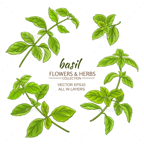 Basil Vector Set - Food Objects