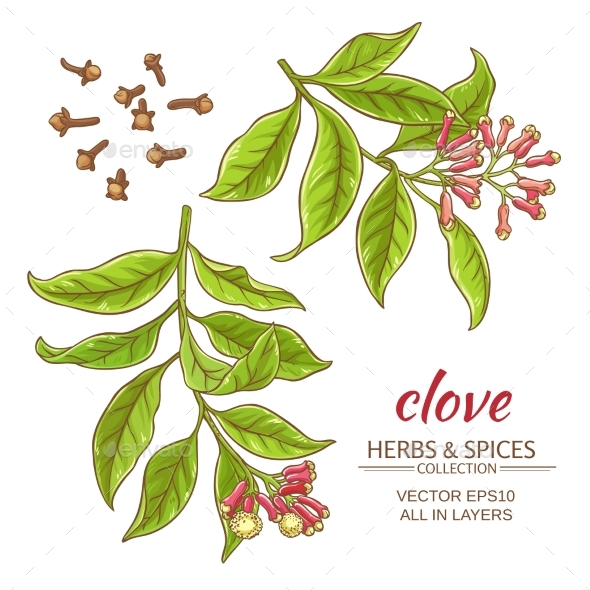 Clove Vector Set - Food Objects