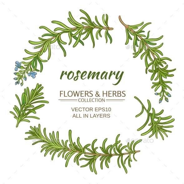 Rosemary Vector Set - Food Objects