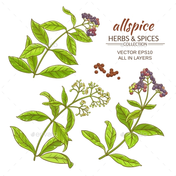 Allspice Vector Set - Food Objects