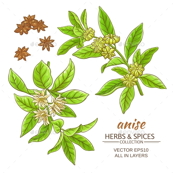 Anise Vector Set - Food Objects