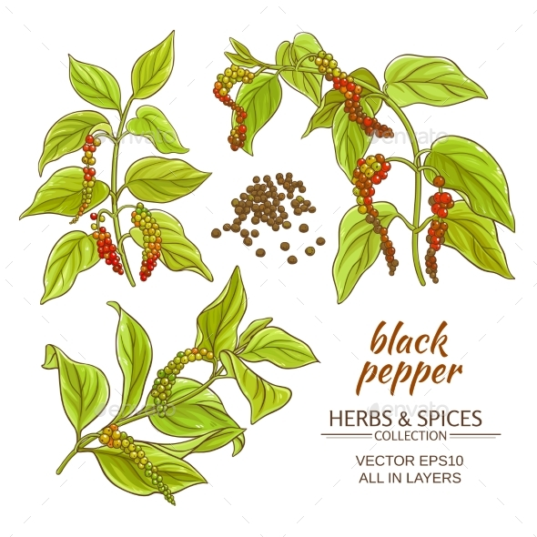 Black Ground Pepper - Food Objects