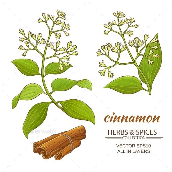 Cinnamon Vector Set - Food Objects