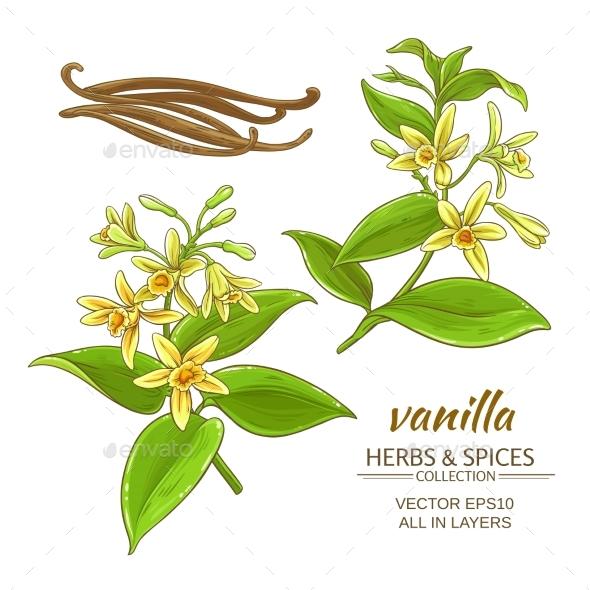 Vanilla Vector Set - Flowers & Plants Nature
