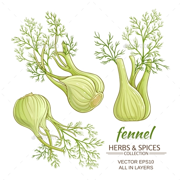 Fennel Vector Set - Food Objects