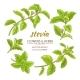 Stevia Vector Set
