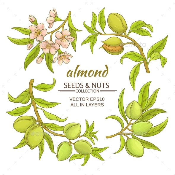 Almond Vector Set - Food Objects