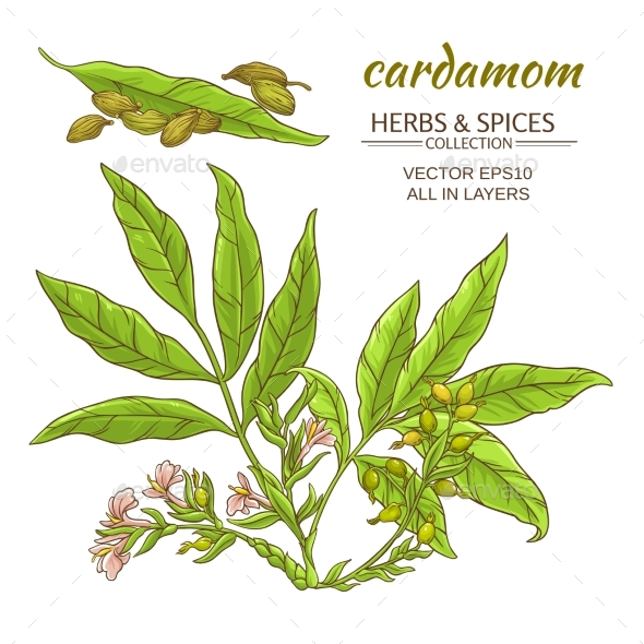Cardamom Vector Set - Flowers & Plants Nature