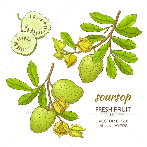 Soursop Vector Set - Food Objects