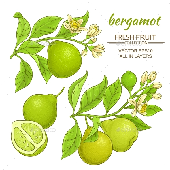 Bergamot Vector Set - Food Objects