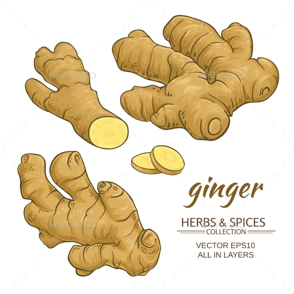 Ginger Roots Vector Set - Food Objects