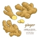 Ginger Roots Vector Set