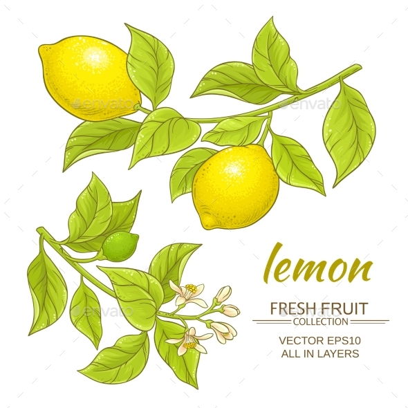 Lemon Vector Set - Food Objects
