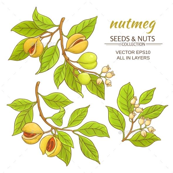 Nutmeg Vector Set - Food Objects