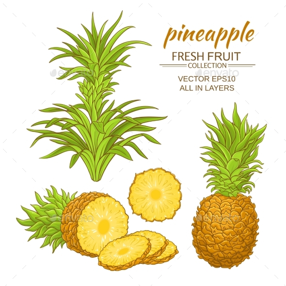 Pineapple Vector Set - Food Objects