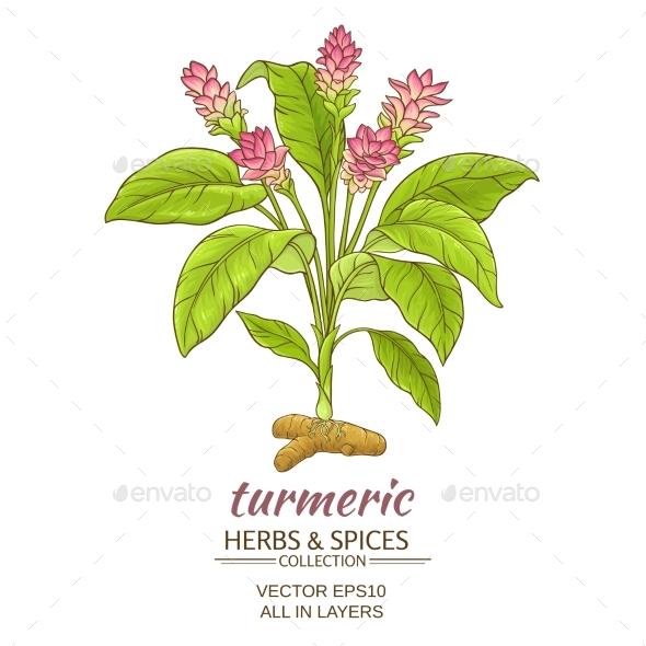 Turmeric  Plant Illustration - Food Objects