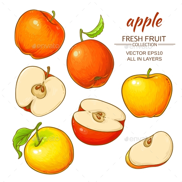 Apple Vector Set - Food Objects