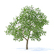 Apple Tree with Flowers 3D Model 3.7m