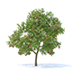 Apple Tree with Fruits 3D Model 3.7m