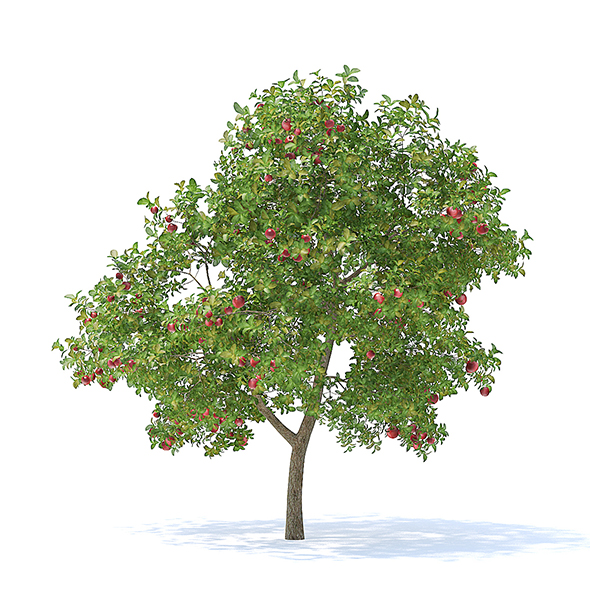 Apple Tree with Fruits 3D Model 3.7m - 3DOcean Item for Sale