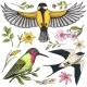 Small Birds of Barn Swallow or Martlet and Parus