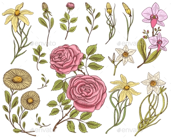 Flowers Set, Roses with Leaves and Buds, Herb - Flowers & Plants Nature