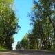 Asphalt Country Road through Beautiful Wild Forest - VideoHive Item for Sale