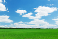 Green grass field and blue sky - PhotoDune Item for Sale