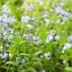 Beautiful Blue Wild Flowers - VideoHive Item for Sale