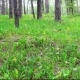 Beautiful Spring Forest and Flowers - VideoHive Item for Sale