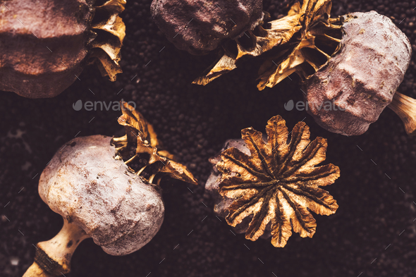 Dried poppy heads and seeds. - Stock Photo - Images
