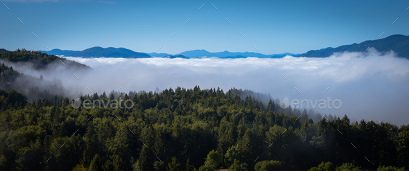 Fog cover the forest. - Stock Photo - Images