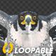 Two Bald Eagles - Flying Around - Transparent Loop - 4K - 1