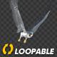 Two Bald Eagles - Flying Around - Transparent Loop - 4K - 10