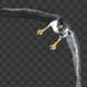 Two Bald Eagles - Flying Around - Transparent Loop - 4K - 6