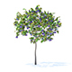 Plum Tree with Fruits 3D Model 2m
