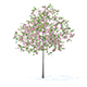 Plum Tree with Flowers 3D Model 3.2m