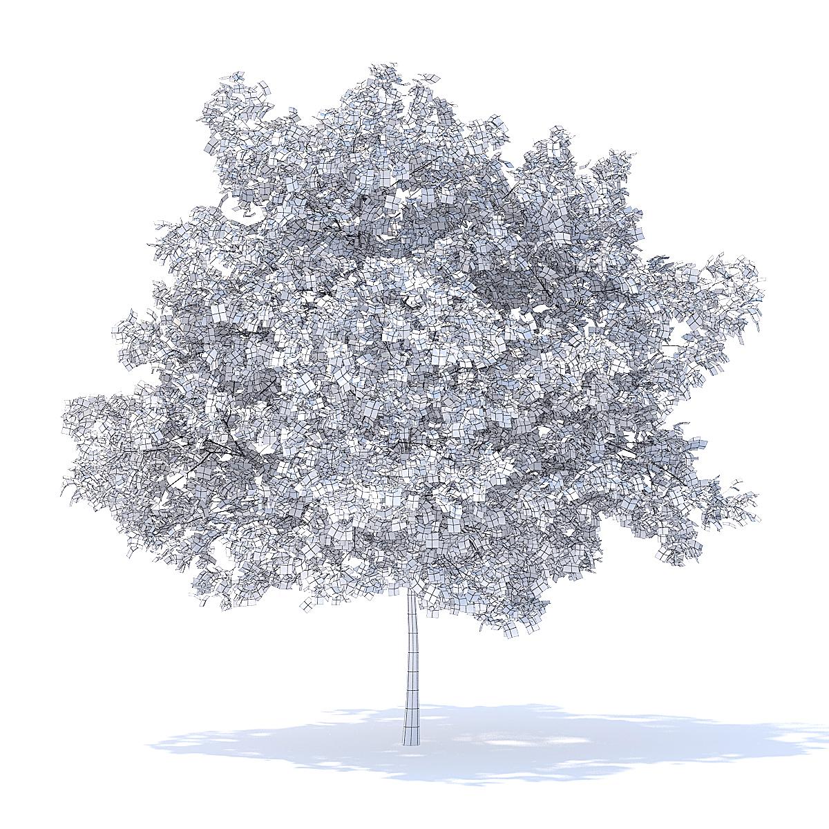Plum Tree 3D Model 5.2m