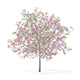 Plum Tree with Flowers 3D Model 5.2m