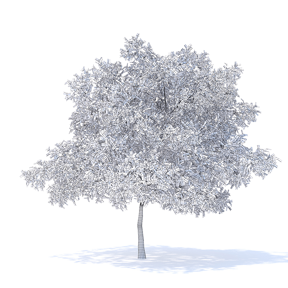 Pear Tree with Flowers 3D Model 6.3m