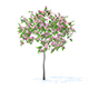Plum Tree with Flowers 3D Model 2m